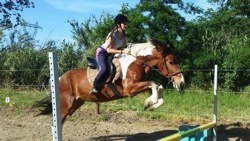 CSO(CONCOURS SAUT OBSTACLE)